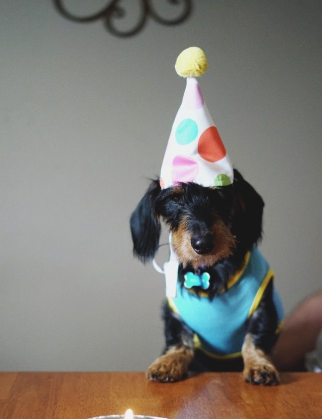 black-and-brown-long-coated-dog-birthday-733835
